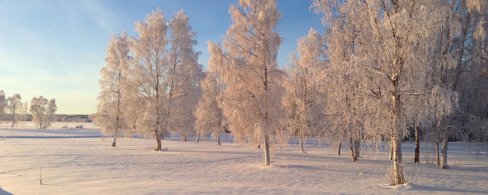 Vinter in innansjön