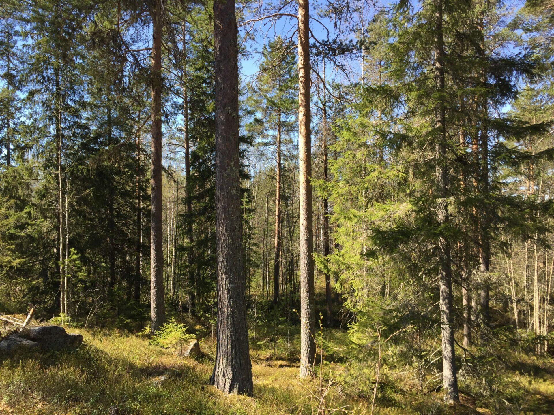 Guidag dag i naturen