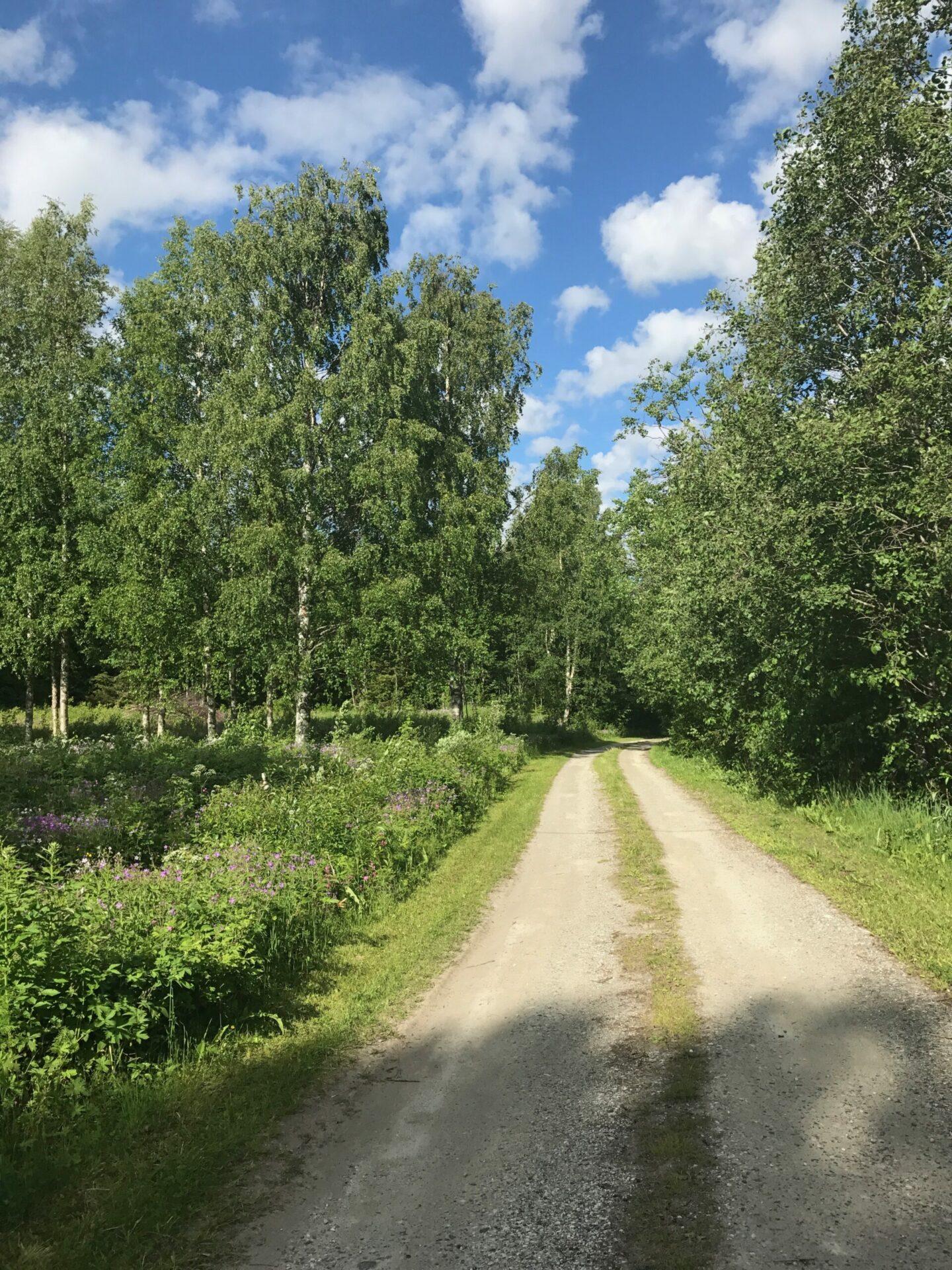 Sommarväg innansjön
